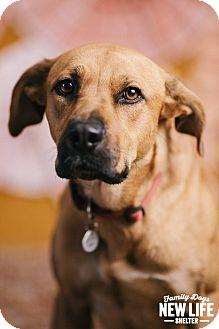 Rhodesian Ridgeback/German Shepherd Dog Mix Dog for adoption in Portland, Oregon - Georgia Isa Peach