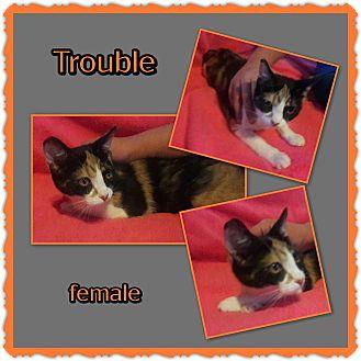 Calico Cat for adoption in Richmond, California - Trouble