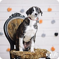 Adopt A Pet :: Cami - Portland, OR