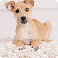 Adopt A Pet :: BlueJay - Portland, OR