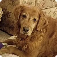 Adopt A Pet :: Magee - New Canaan, CT