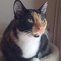 Adopt A Pet :: Ruby - O'Fallon, MO