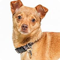 Adopt A Pet :: Rusty - San Luis Obispo, CA