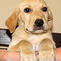 Adopt A Pet :: Matt - Southbury, CT