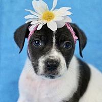Adopt A Pet :: Cinderella - Picayune, MS