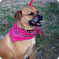 Adopt A Pet :: QUEENIE - Courtsey Post - Glastonbury, CT