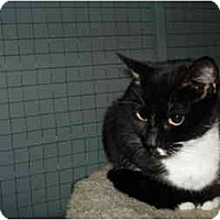 Adopt A Pet :: Louise - Mission, BC