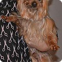 Adopt A Pet :: Toby - Greensboro, NC