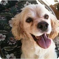 Adopt A Pet :: Bubba - Rancho Mirage, CA
