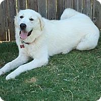 Adopt A Pet :: Great Pyrenees - Oklahoma City, OK
