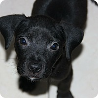 Adopt A Pet :: Bebe - Miami, FL