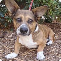 Adopt A Pet :: Benji - Lomita, CA