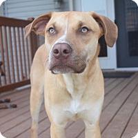 Adopt A Pet :: Dior - Dayton, OH