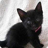 Adopt A Pet :: Annalee - Orlando, FL