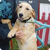 Adopt A Pet :: LucyLu - New Canaan, CT