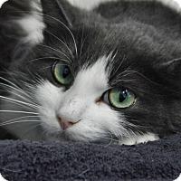 Adopt A Pet :: Ida - Long Beach, CA