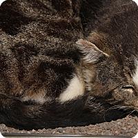 Adopt A Pet :: Trapper John (Neutered) - Marietta, OH