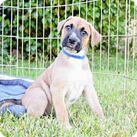 Adopt A Pet :: Ludo - Alameda, CA