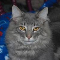 Adopt A Pet :: Simba - Erie, PA