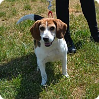 Adopt A Pet :: Sammy - Akron, OH