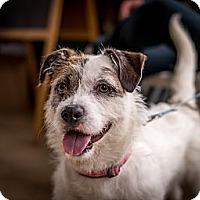 Adopt A Pet :: Fargo - Chicago, IL