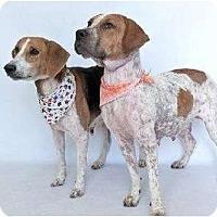 Adopt A Pet :: Scout's puppies - Orlando, FL