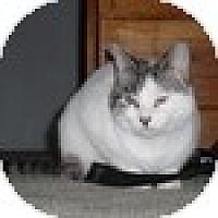 Adopt A Pet :: Skye - Vancouver, BC