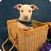 Adopt A Pet :: Casanova - Lapeer, MI