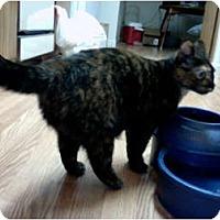 Adopt A Pet :: Abby - Elverta, CA
