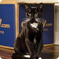 Adopt A Pet :: Cherry - Brooklyn, NY