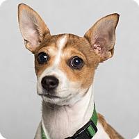Adopt A Pet :: Monte - Minneapolis, MN