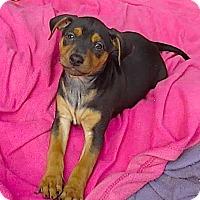 Adopt A Pet :: Daisy**Video* - Pasadena, CA
