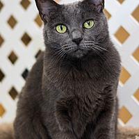 Adopt A Pet :: River - Austintown, OH