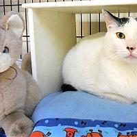 Adopt A Pet :: Ajay - Carmel, NY
