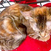 Adopt A Pet :: Monica - Flushing, NY