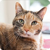 Adopt A Pet :: Penny - Concord, NH