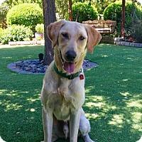 Adopt A Pet :: Cody - San Francisco, CA