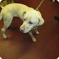 Adopt A Pet :: Lady - Newnan City, GA