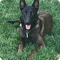 Adopt A Pet :: Owen - Salt Lake City, UT