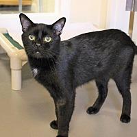 Adopt A Pet :: Stark - Atlanta, GA