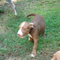 Adopt A Pet :: Cooper - Duluth, GA