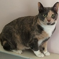 Adopt A Pet :: Paisley - Salisbury, NC