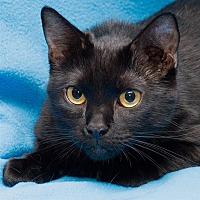 Adopt A Pet :: Misty - Westland, MI
