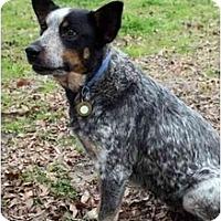 Adopt A Pet :: Sophie - Siler City, NC