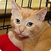 Adopt A Pet :: Ozzie - Irvine, CA