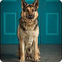 Adopt A Pet :: Sebastian - Owensboro, KY