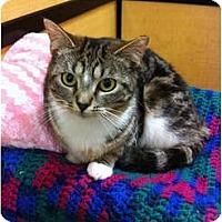 Adopt A Pet :: Shelby - Farmingdale, NY