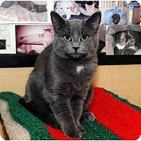 Adopt A Pet :: Avery - Farmingdale, NY