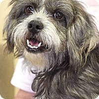 Adopt A Pet :: Henry - Homewood, AL