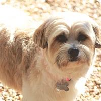 Adopt A Pet :: Dovie - Norwalk, CT